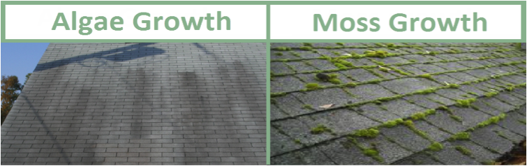 Best Ways To Prevent Roof Stains From Algae And Moss