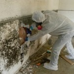 mold-remediation-carmel-indiana