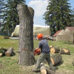 tree-removal-zionsville-indiana